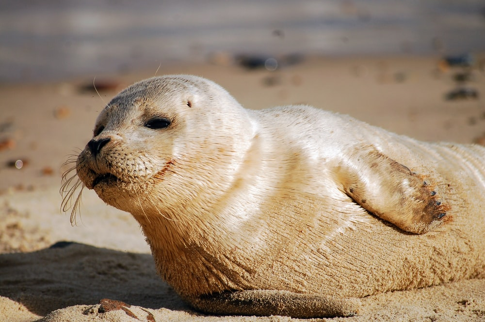 white seal on soil