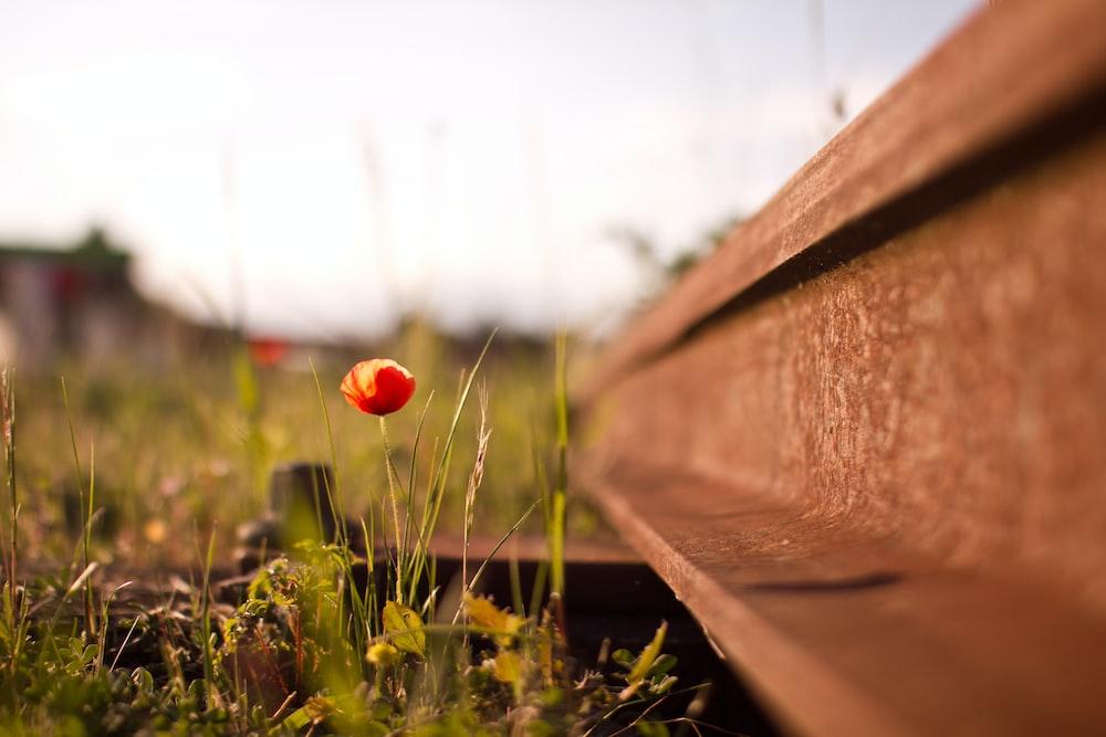 orange flower beside metal beam