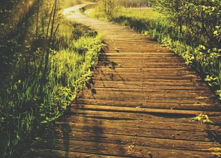 empty wooden pathway in between trees and grass during daytime