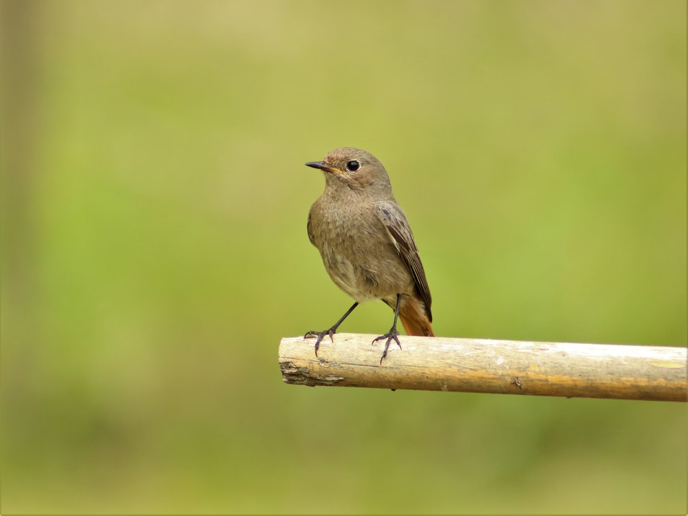 brown bird on stick