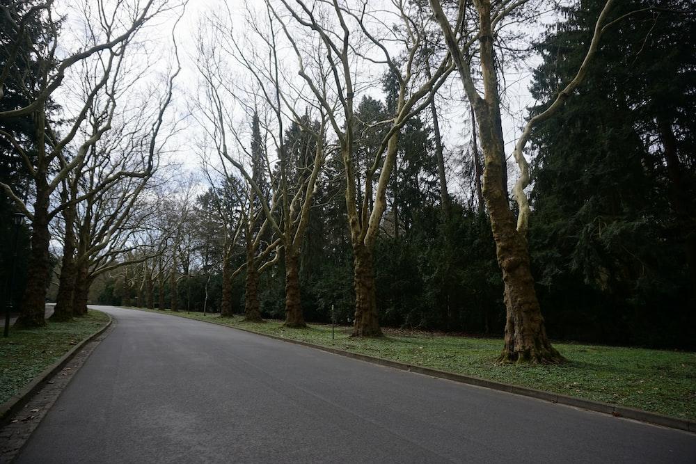 empty concrete road in between bare trees