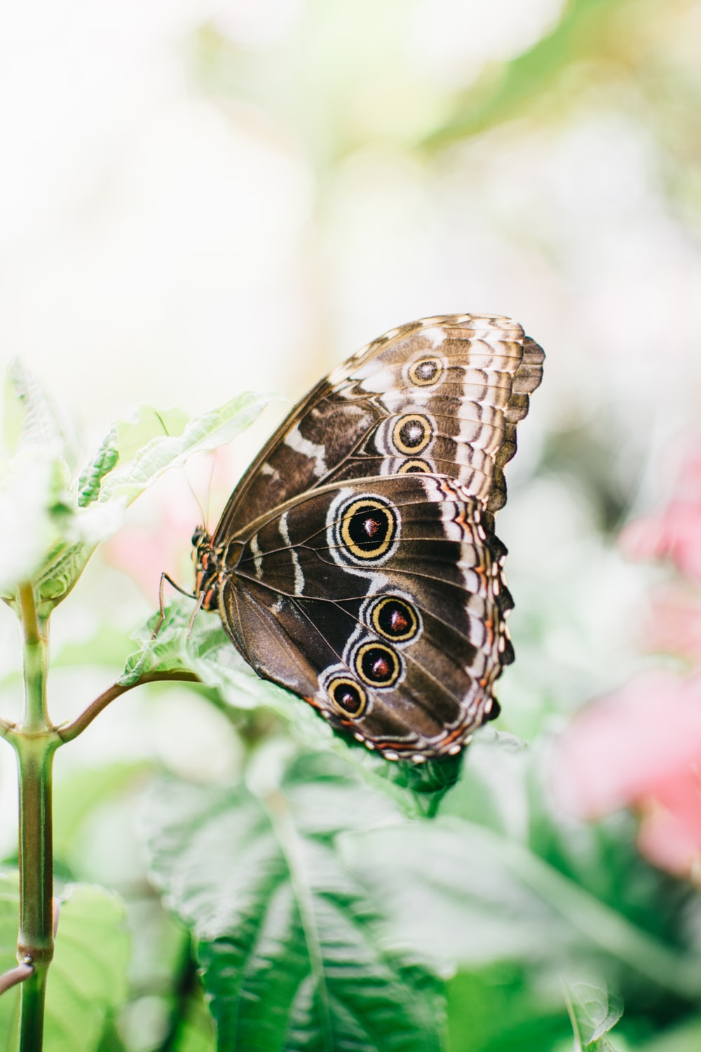brown and white butterfly