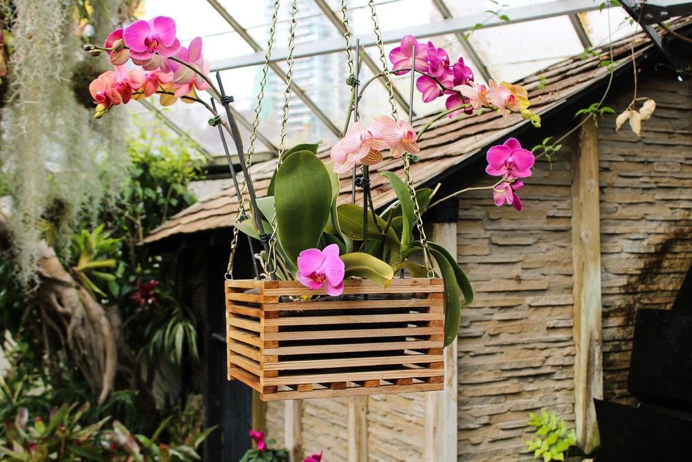 purple orchid flower in brown wooden hanging planter stand