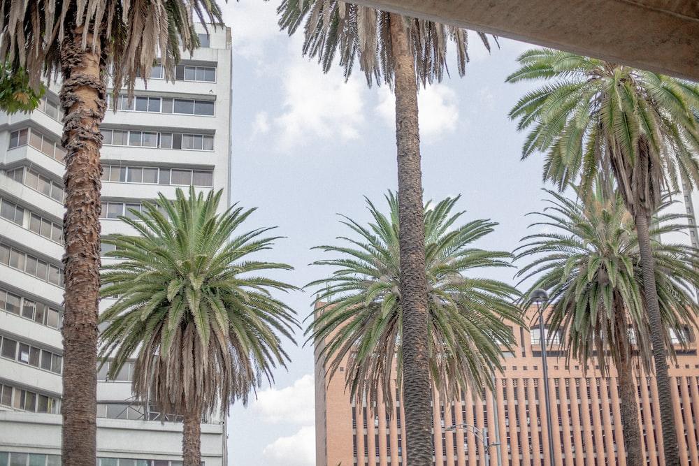 six coconut trees
