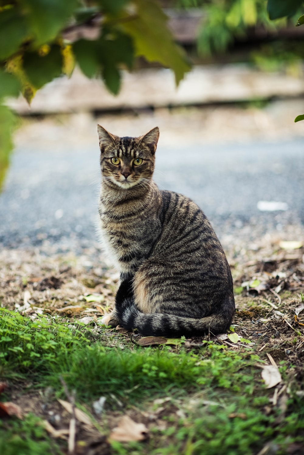 black and gray tabby cat sitting on the ground
