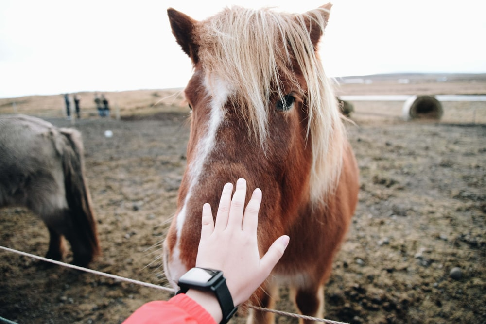 person about to touch a horse