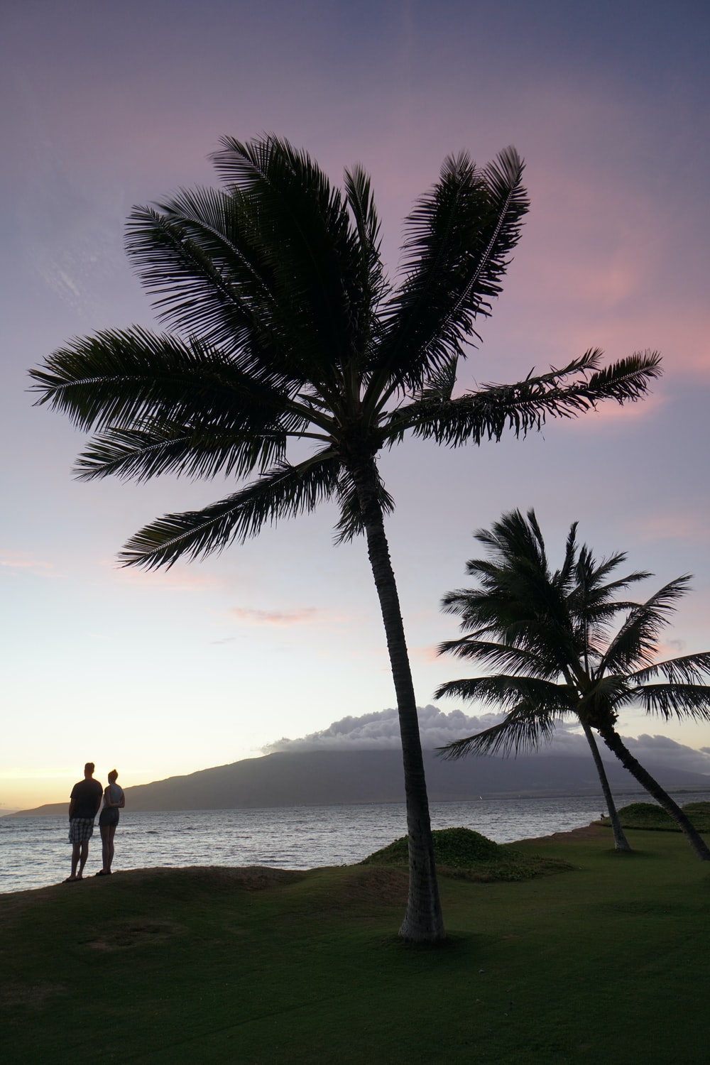 silhouette of two person standing beside palm trees