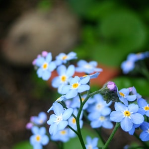blue-petaled flowers