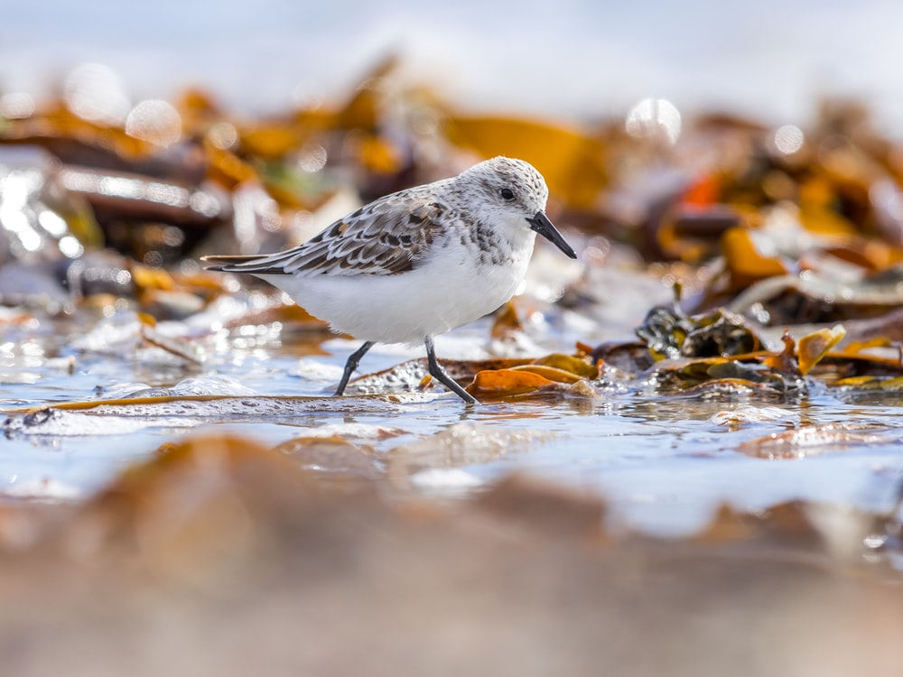 grey and white bird on shallow water