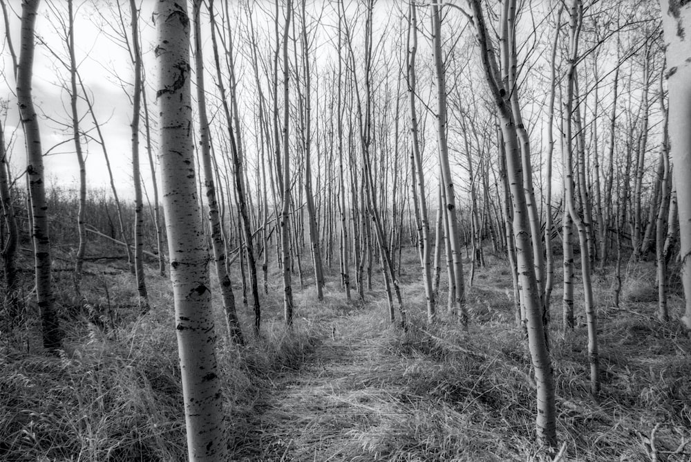 lined bare trees at daytime
