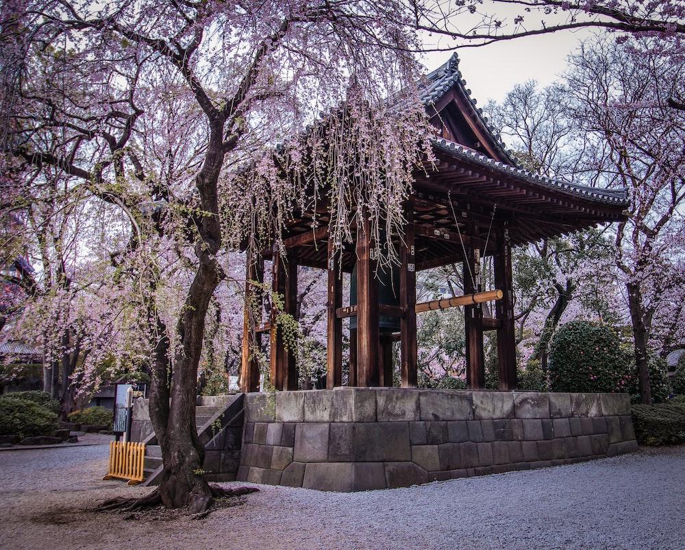 gazebo between trees during daytime