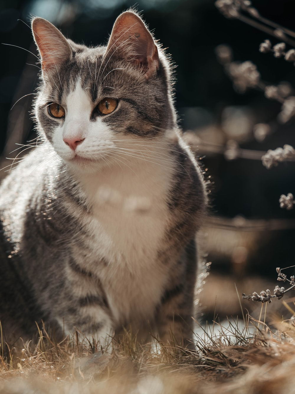 closeup photo of gray cat sitting on grass