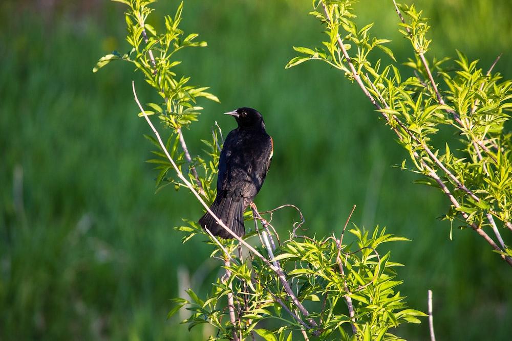black bird on tree
