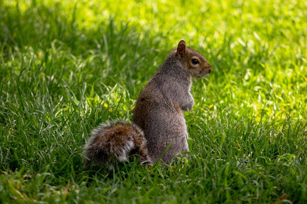 squirrel on grass during daytime
