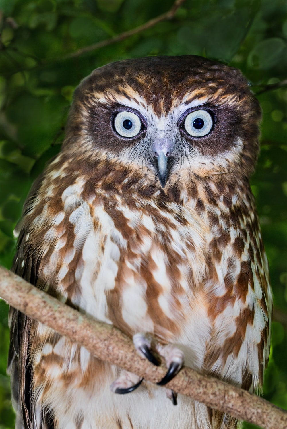 brown owl on tree in close-up photo