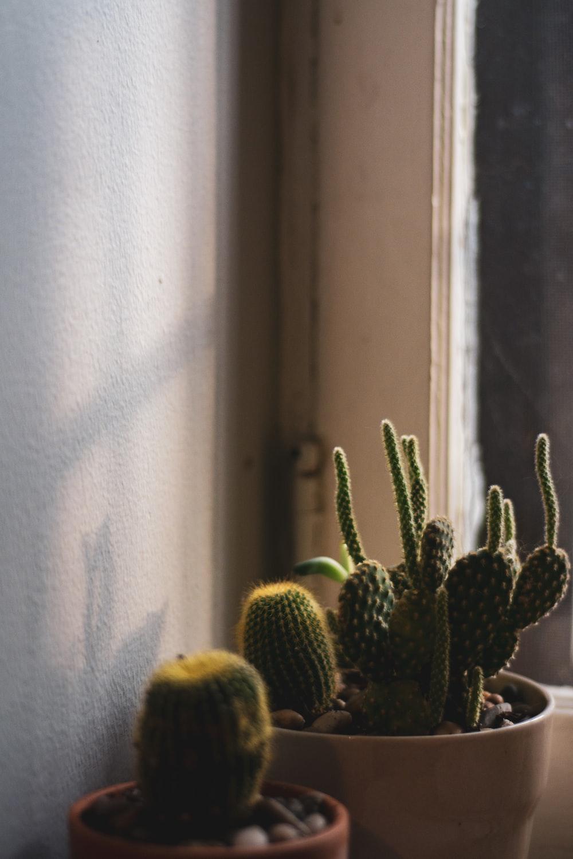 green cactus plant in planter