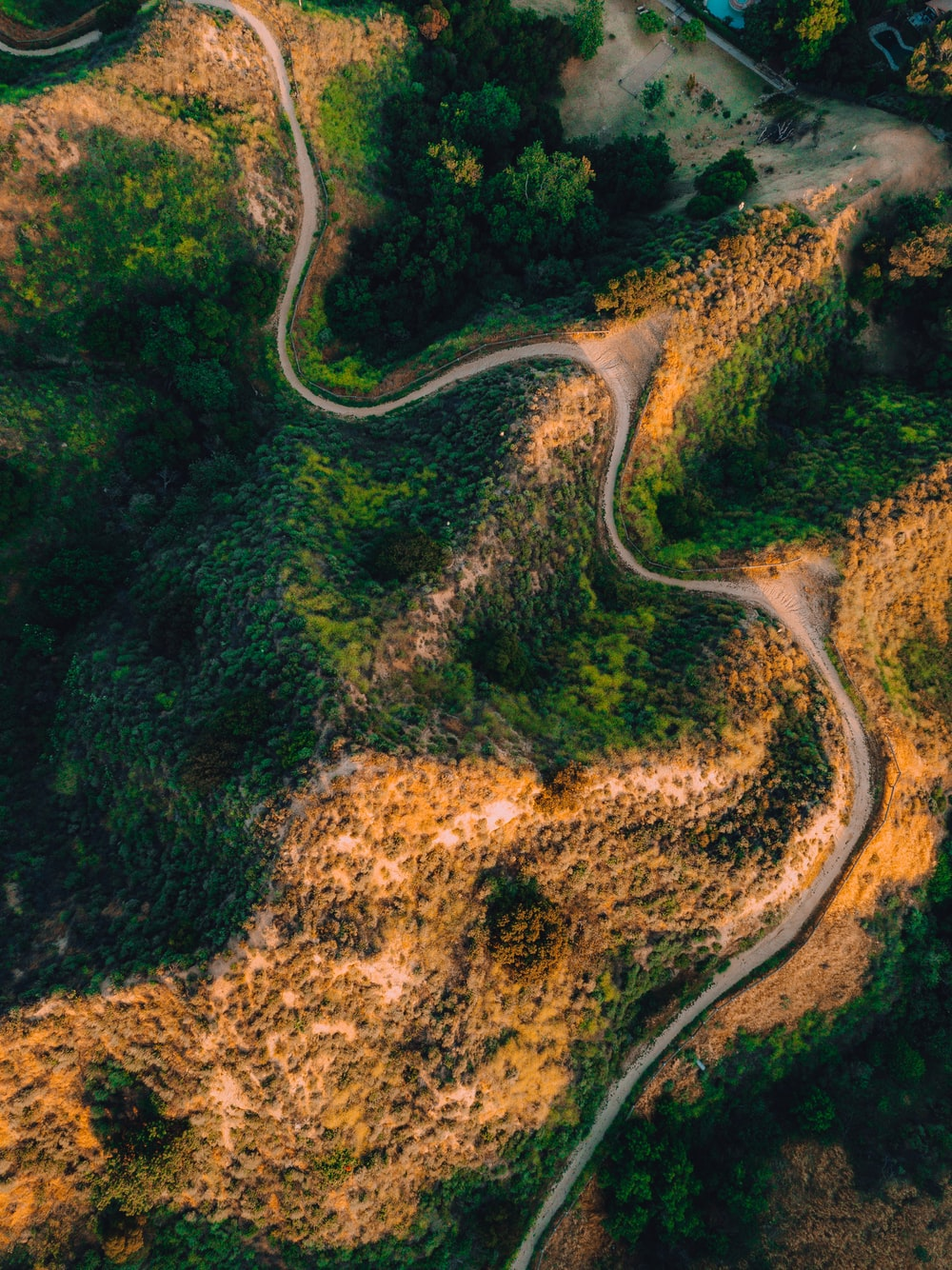 empty road between trees in aerial photography