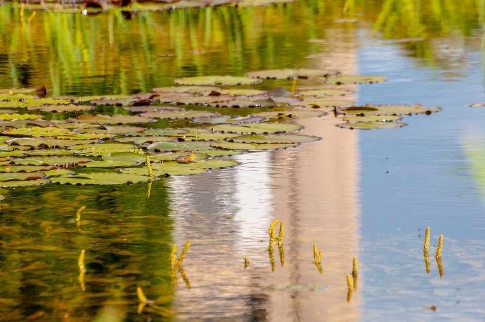 green leaves on water during daytime