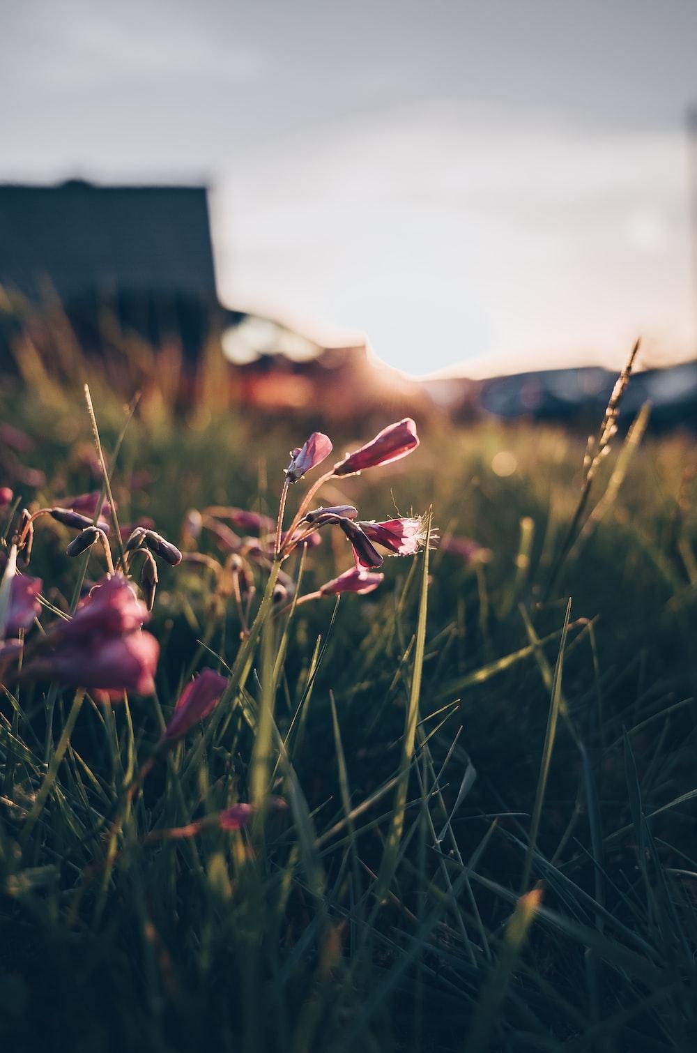 pink-petaled flower selective focus