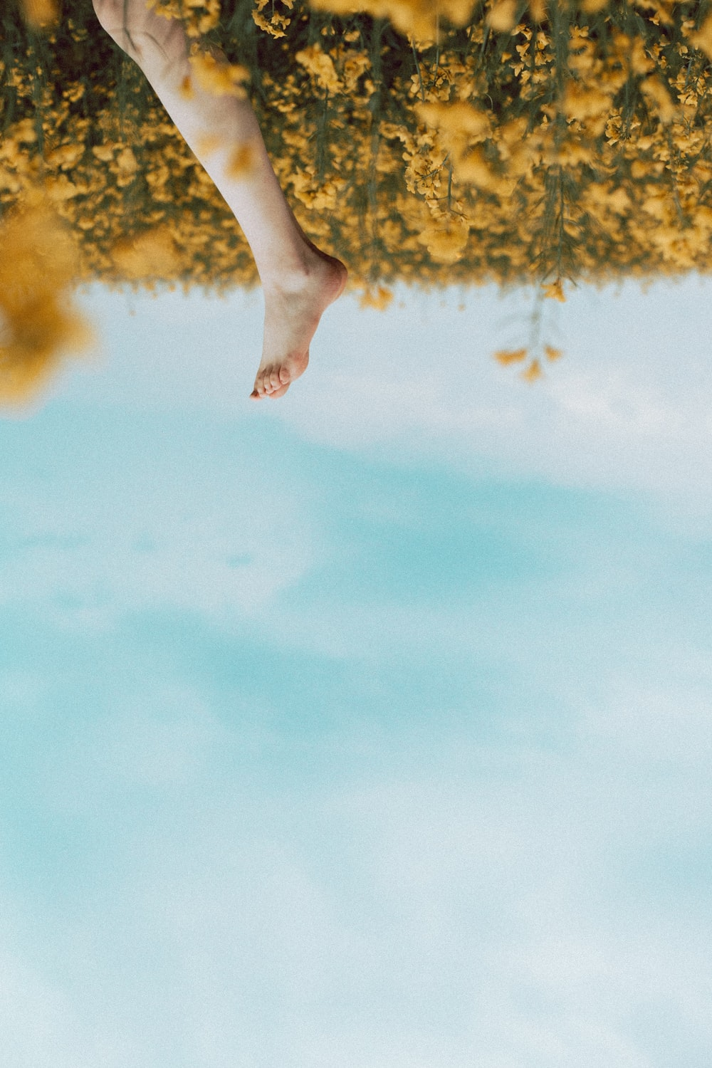 person's foot in a yellow flower field during daytime