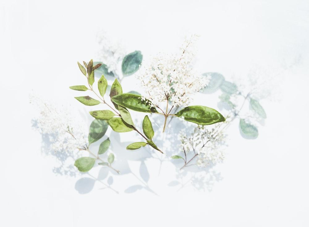 green leaves artwork