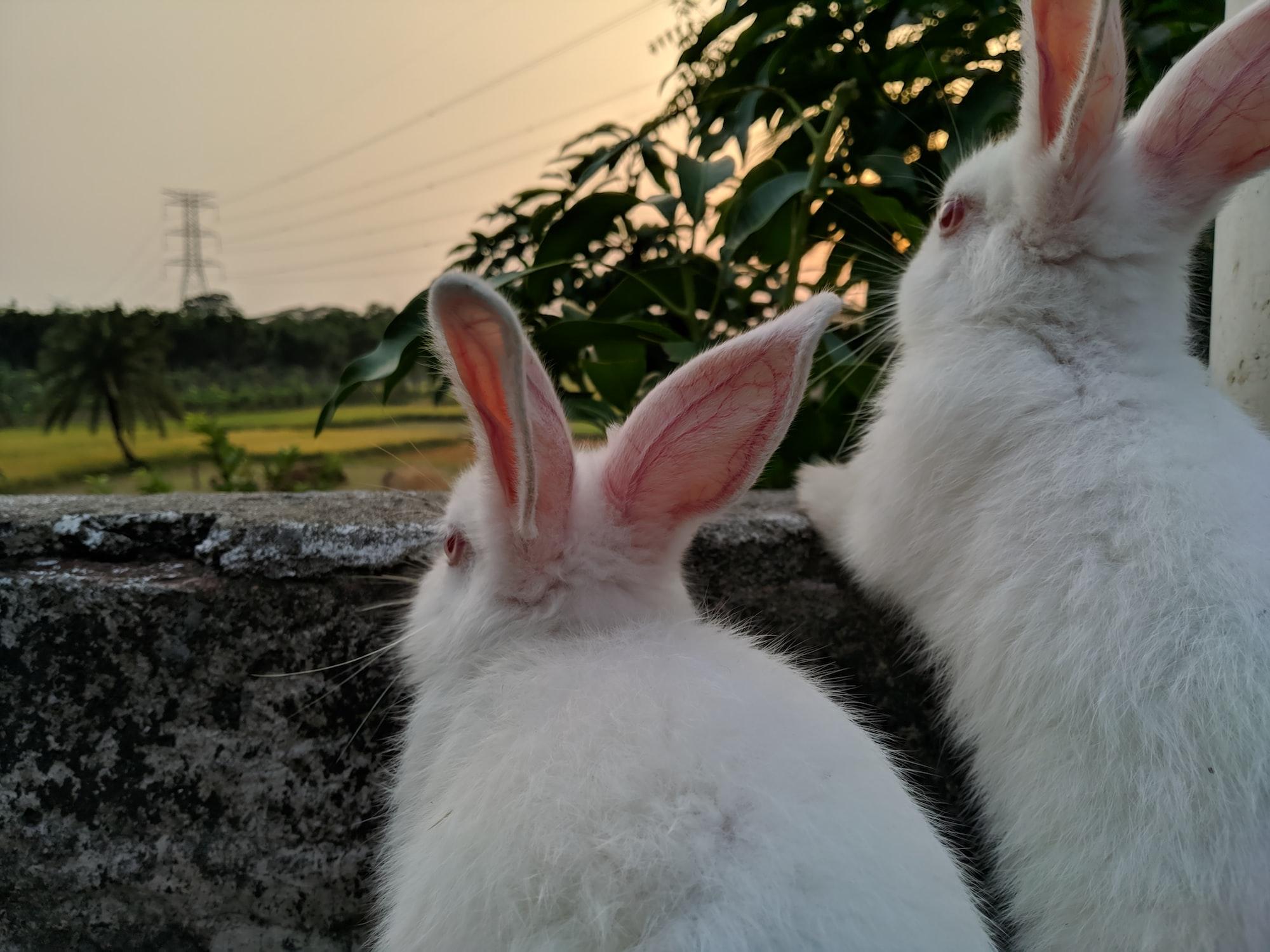 Si vous chassez deux lapins, vous n'en attraperez aucun