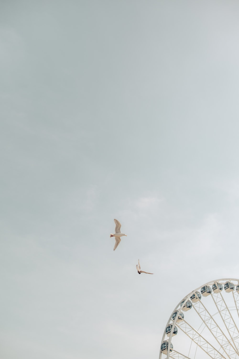 two birds on flight