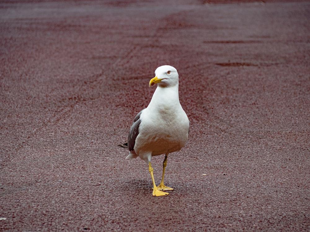 white seagull during daytime