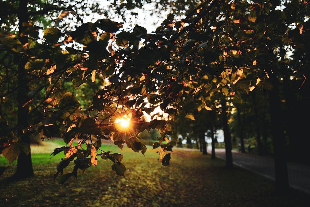 sun piercing through trees