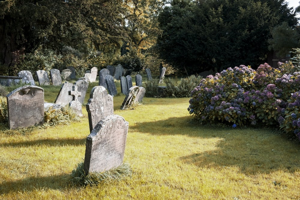 gray tombstones near purple flowers
