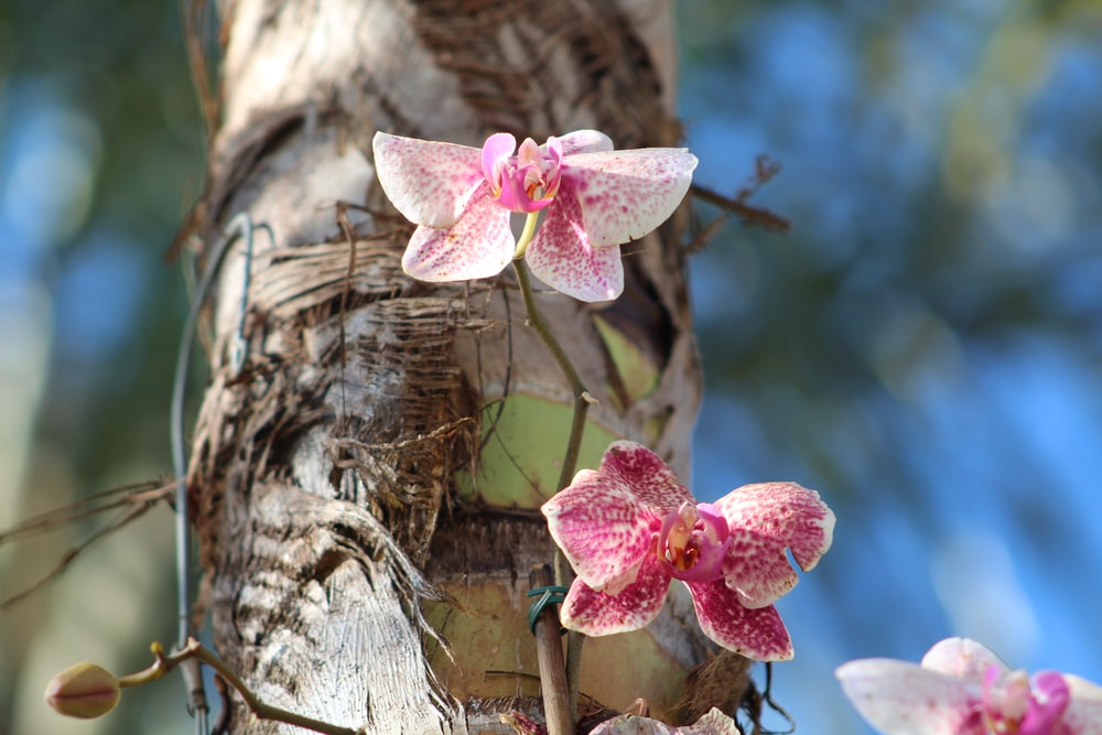 white and pink orchid plant