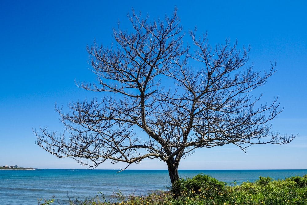 bare tree by the sea at daytime