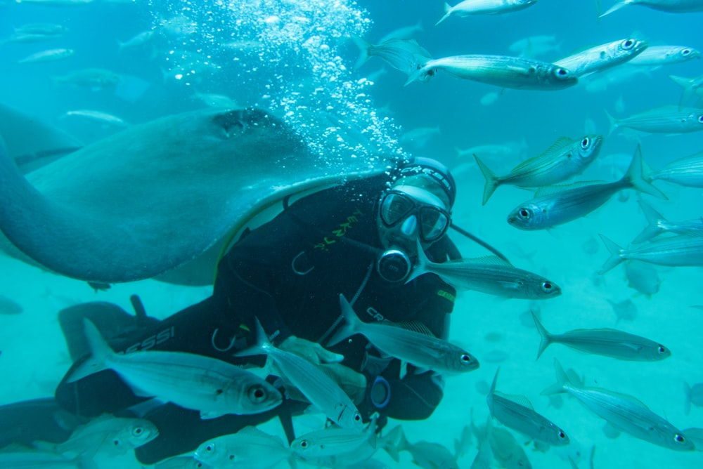scuba divers beside fish