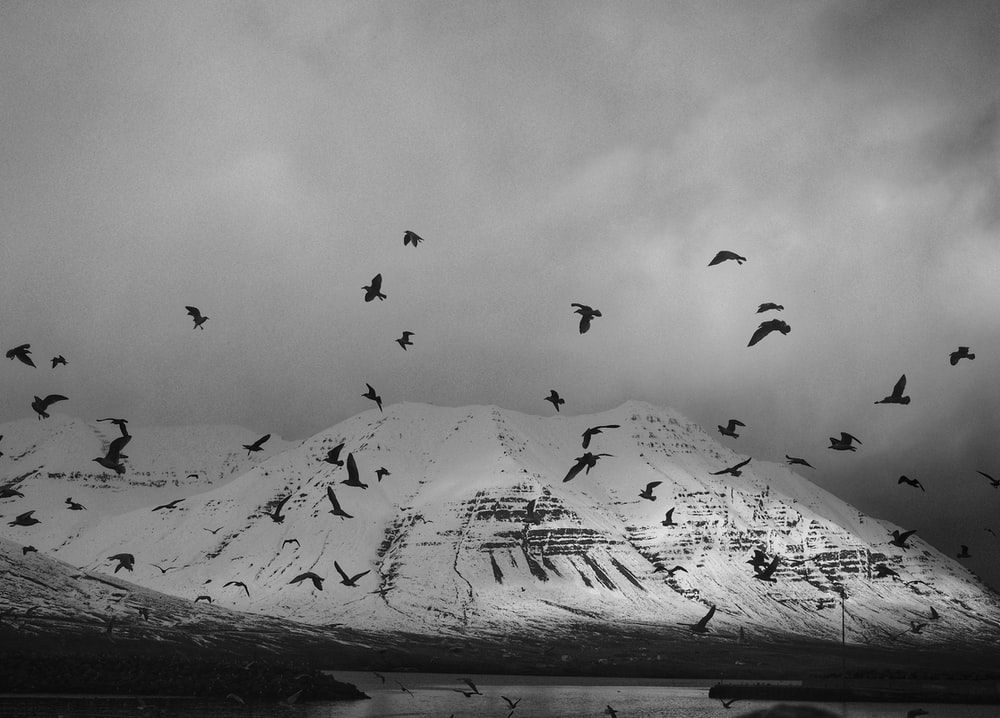 grayscale photography of birds flying