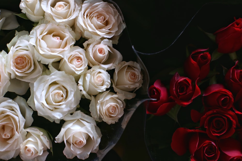 red and white rose flowers