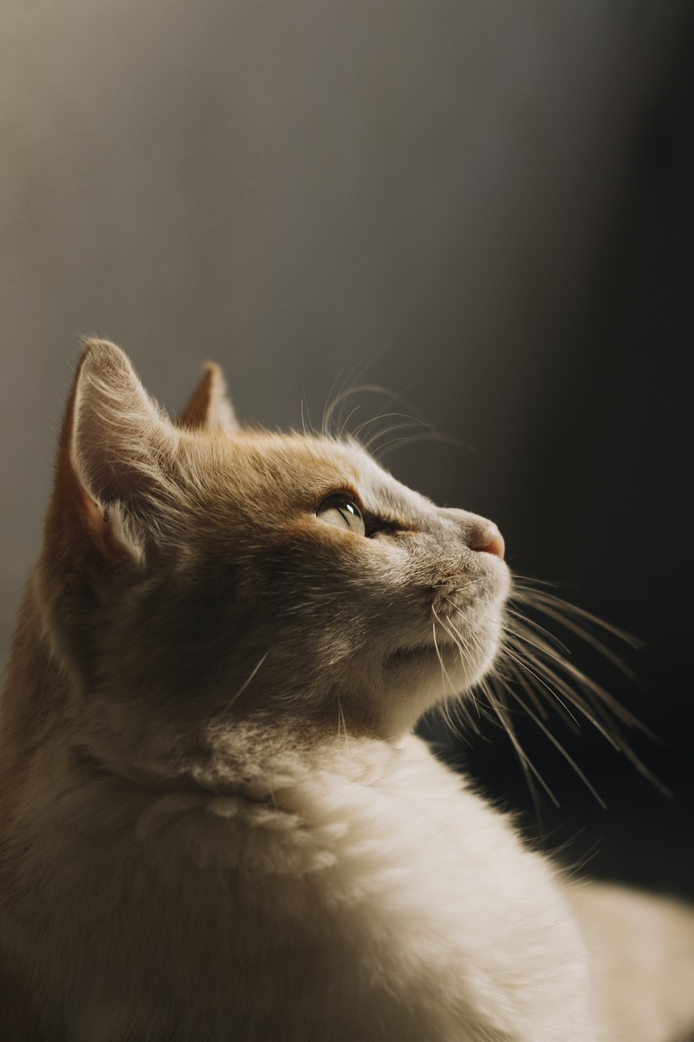 close view of cat