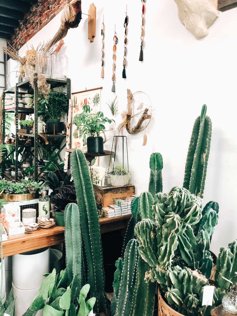 cacti beside white wall