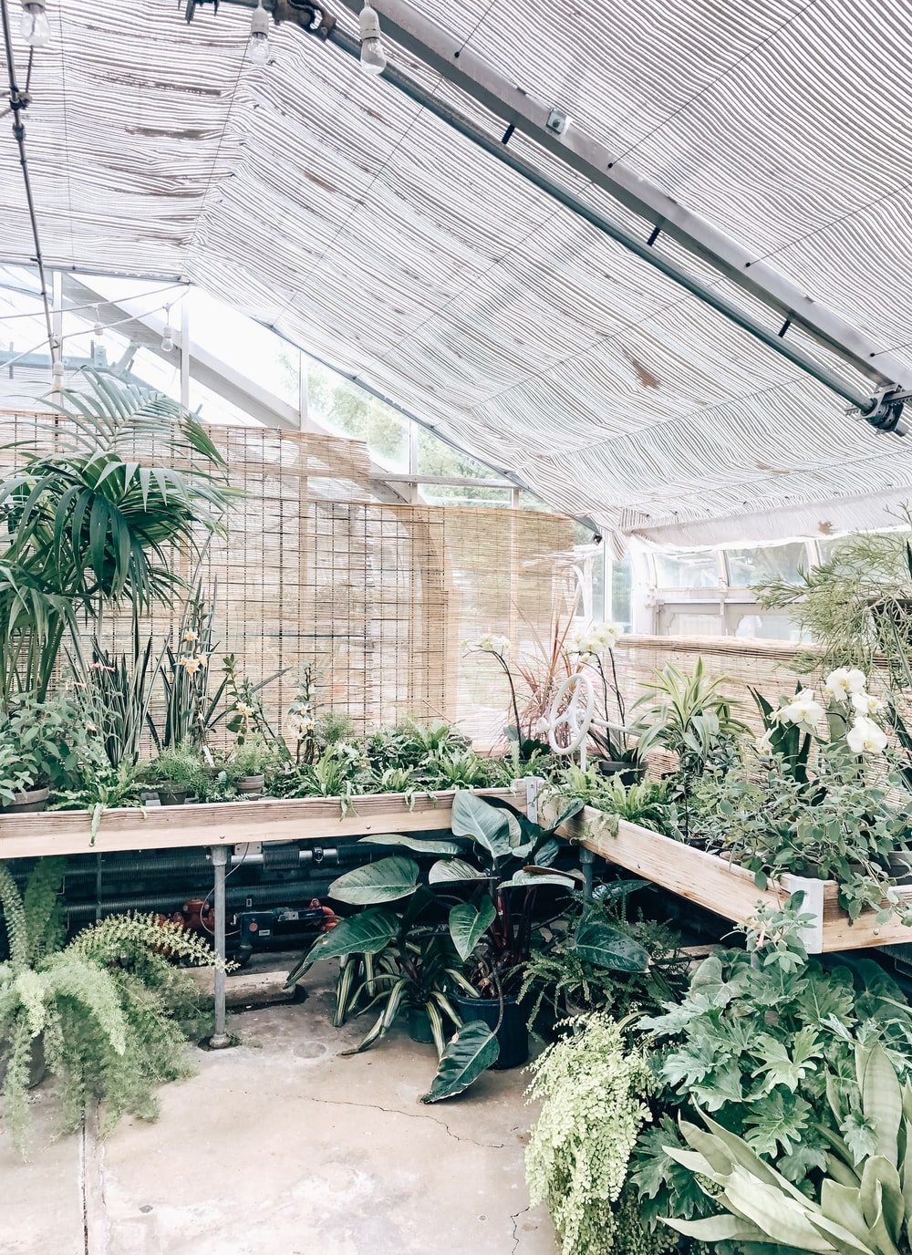 green-leafed plants in greenhouse