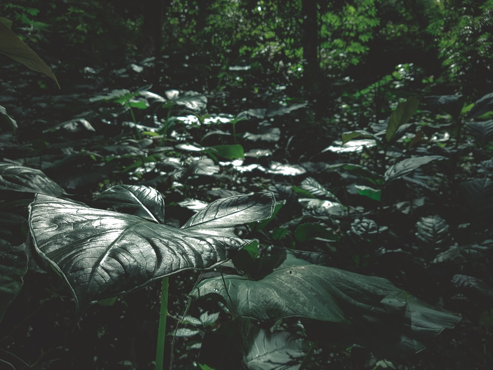 closeup photography of taro plants at the forest