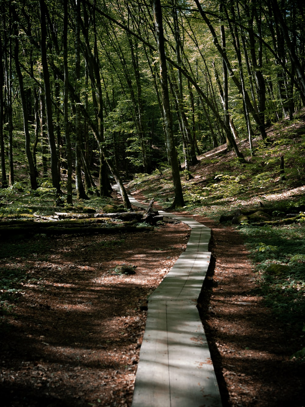 concrete pathway on ground surrounded with trees