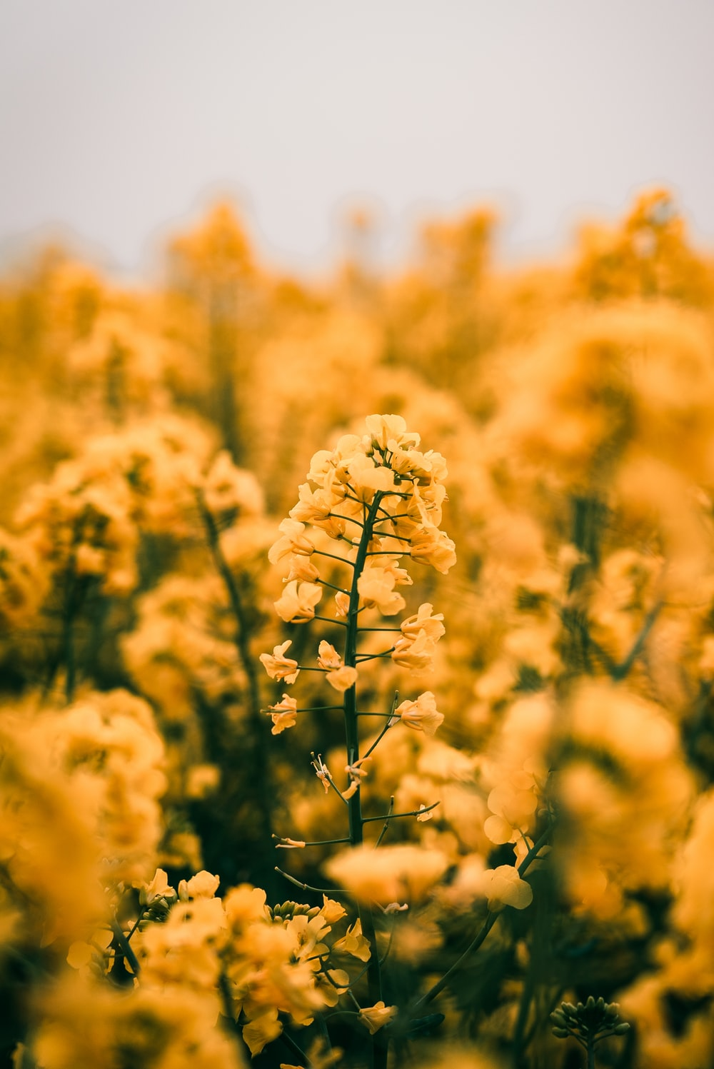 yellow clustered flowers in soft focus photography