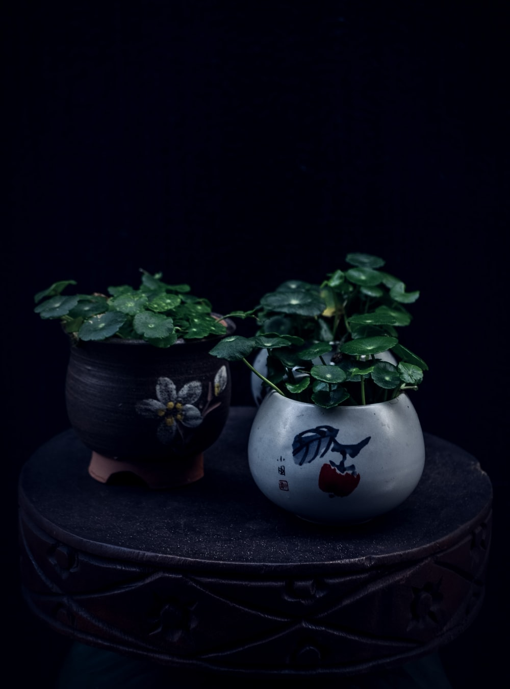two potted green leaf plants on round table
