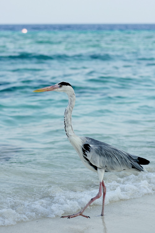 white bird on shore