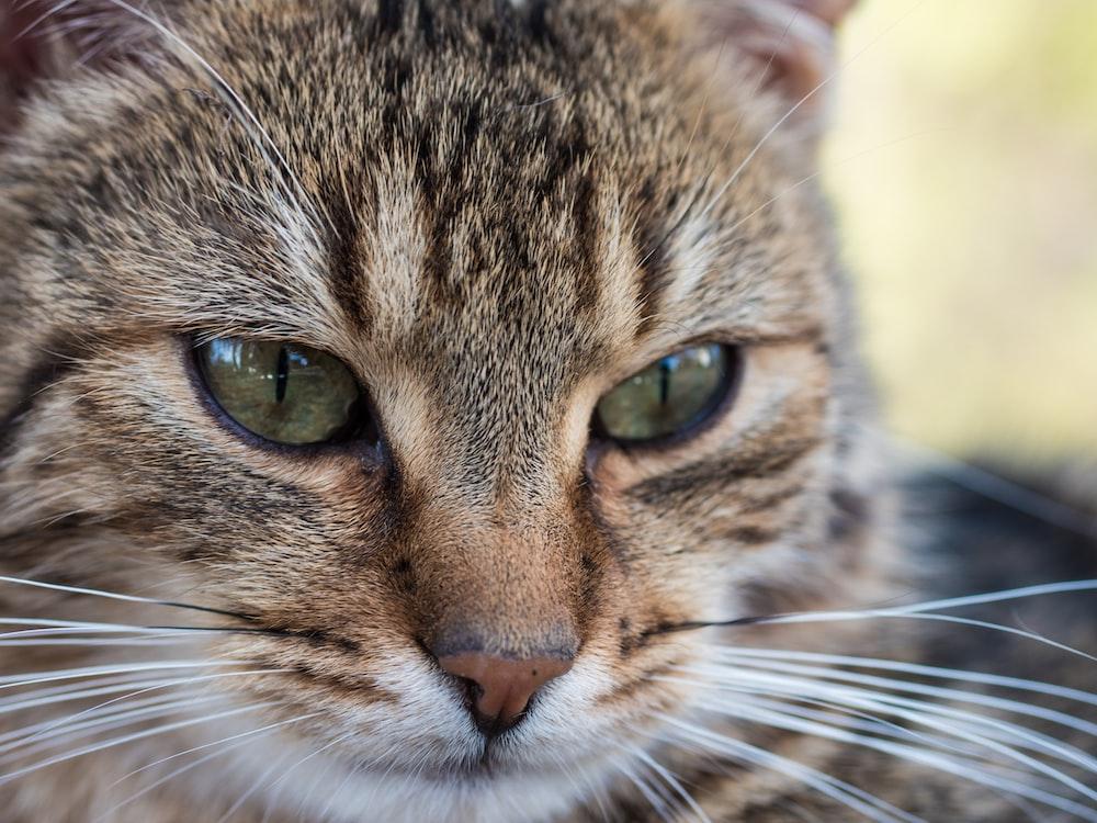 close up photo of cat