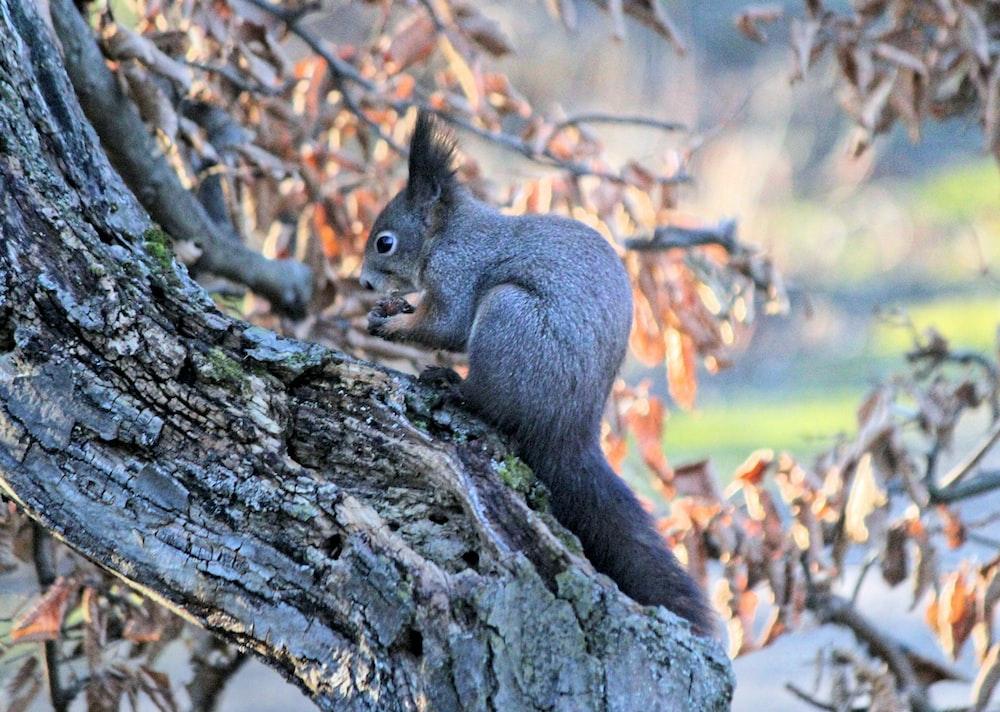 gray animal on tree