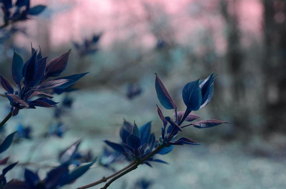 blue leaf plant close-up photography