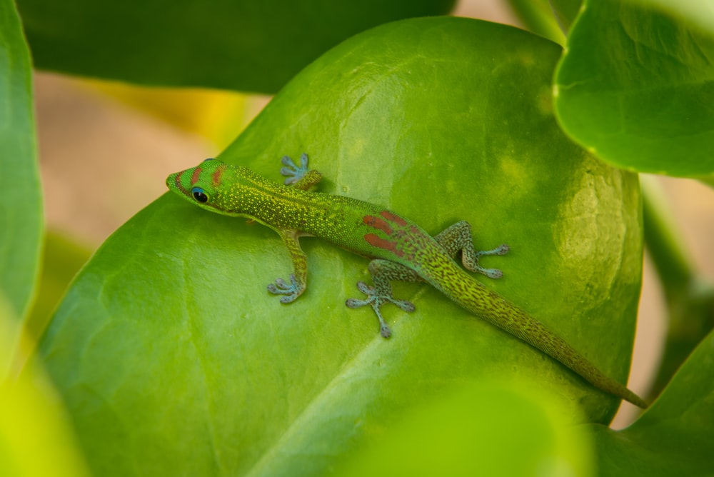 green lizard on green leaf