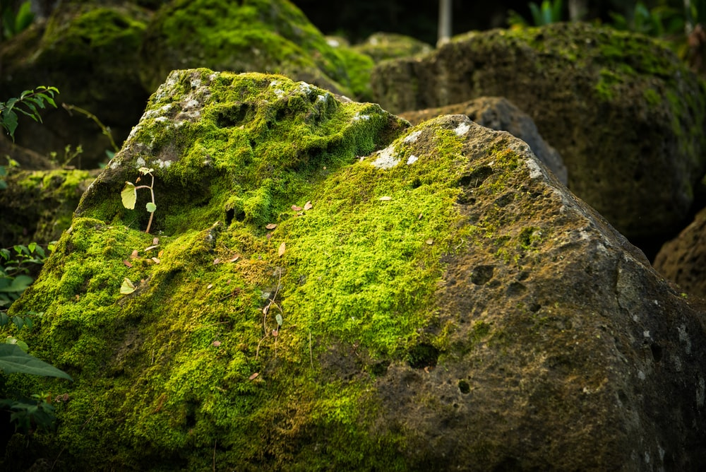 rock covered with green leafed plant