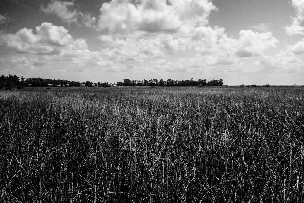 grayscale photo of grass field