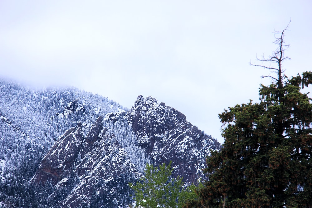 mountain and trees covered with snow